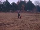 7. Dezember 2005 Erste Treibjagd_3